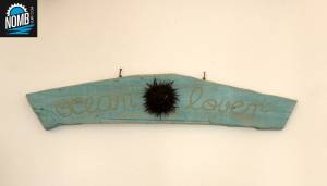 Driftwood vintage style with sea urchin