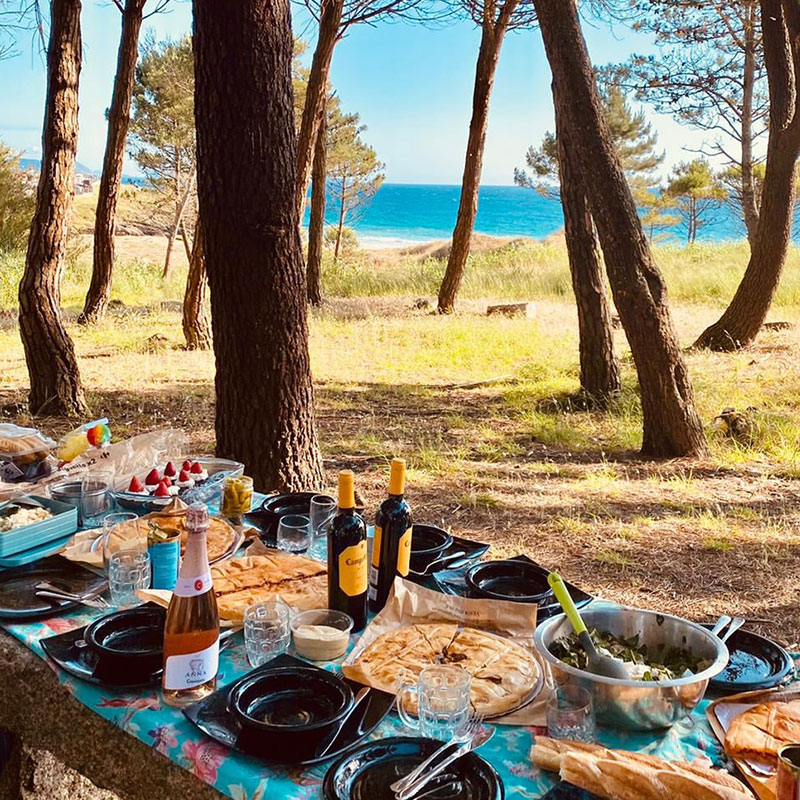 Picnic in the pine forest in Galicia